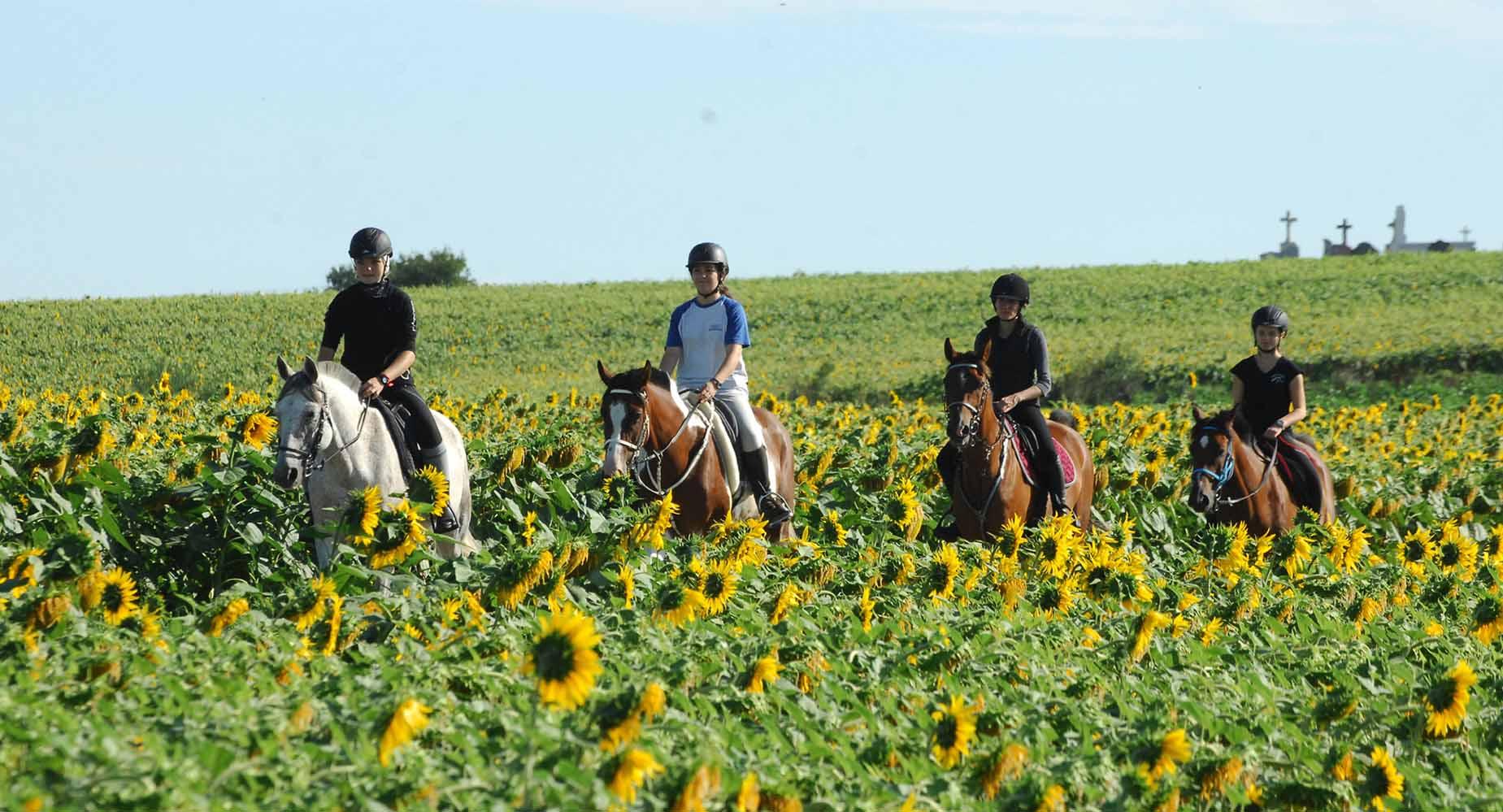 Equitation promenade ecurie de la teoulere 2016