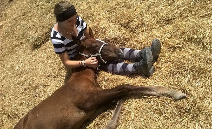 Poulain elevage chevaux endurance